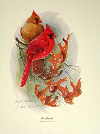 Hipple Cardinal by John Ruthven