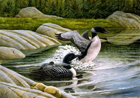 Loon Family by John Ruthven