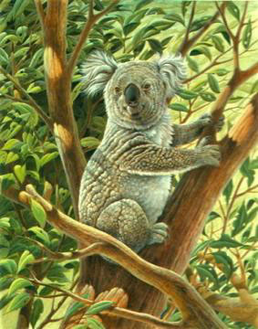 Tully Koala Bear by John Ruthven