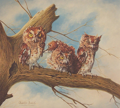 Screech Owls by Charles Frace