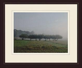 Apple Trees by Martha Stewart