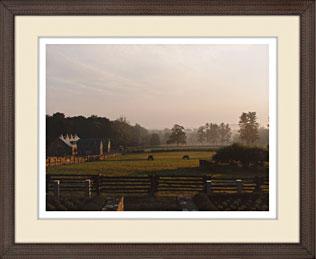 Friesian Horses Grazing by Martha Stewart