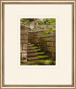 Mossy Steps by Martha Stewart