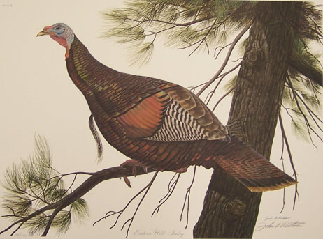 nature seasons on pinterest wild turkey pheasant and quails