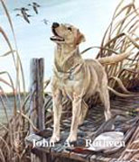 Katie, Yellow Labrador by John Ruthven