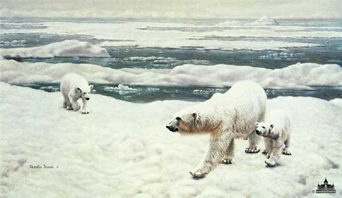 Polar Bears by Charles Frace