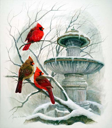 Cardinals at Probasco Fountain by John Ruthven