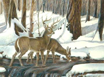 White-Tailed Deer by John Ruthven