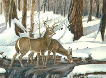 White-Tailed Deer by John Ruthven
