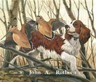 Winston, Springer Spaniel 1983 by John Ruthven