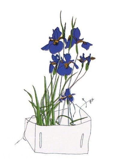 Wild Iris by Brett Harper