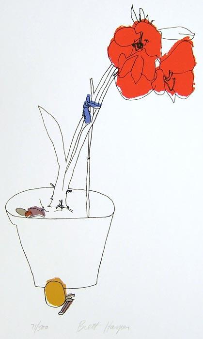 Amaryllis by Brett Harper