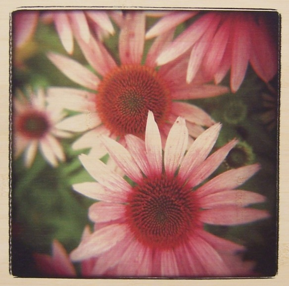 Pink by Rebecca Tolk