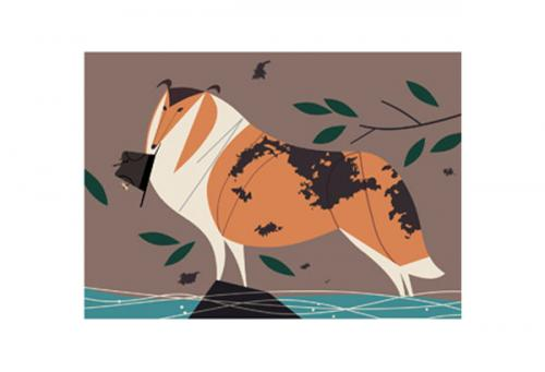 Collie by Charley Harper