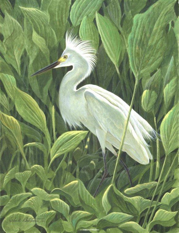 Snowy Egret by John Ruthven