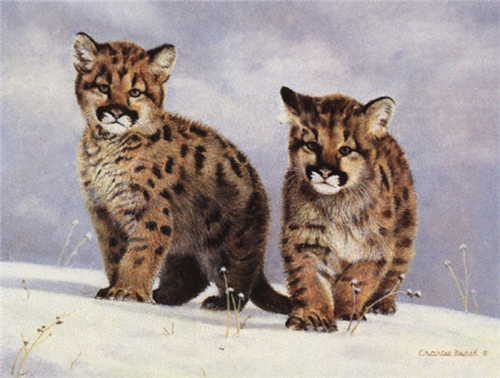 Winter Scouts by Charles Frace