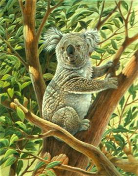 Tully Koala Bear by John Ruthven