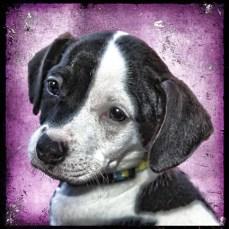 Marc Wavra dog portrait #1