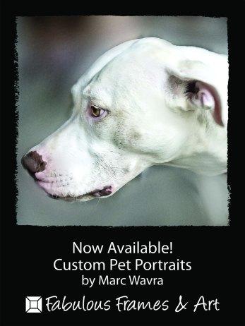 Marc Wavra dog portrait #3